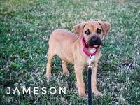 Jameson's story Please contact us at