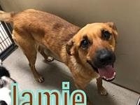 My story Jamie is a 2-3 yr old Shepherd mix. Such a
