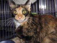 JAN's story Jan is a pretty torti/calico girl with a