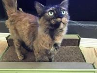Jane's story Jane is a 1 to 2 year old mama cat who was