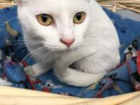 Hey, My name is Jane I am a 1 year old Domestic Short