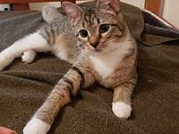 Janelle's story Janelle was born at our shelter in