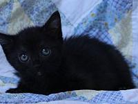 Janet's story 10 week old kitten. Adoption fee includes