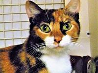 Janice's story Janice is a stunning two-year-old calico