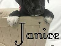 Janice's story You can fill out an adoption application