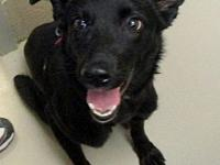Janna's story Janna is a young, female terrier mix who
