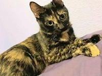 My story Janna is a 1-2 year old very sweet girl. She