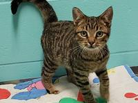 Jarrett's story Jarrett is a sweet 4 month old male