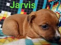 Jarvis's story Mary Hall Ruddiman Canine Shelter 24