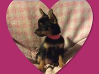Jasmine is a sweet Pomeranian/Yorkie. She has her 1st