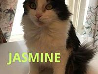 Jasmine's story Beautiful Jasmine came to us with her