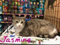 Jasmine is 1-2 years old. She was found outside and had