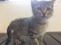 Jasmine's story Adoption fee is $75, this kittens