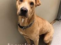 My story Jasmine is a 1 yr old shar-pei mix. Such a