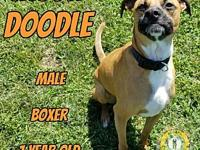 Jason Doodle's story You can fill out an adoption