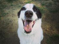 My name is Jasper. I am a 5 year old Border Collie mix