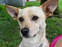 Jasper's story This sweet pea is Jasper a 2.5 year old
