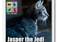 Jasper's story Jasper is an adorable and affectionate