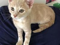 My story Meet Jasper, one of the gem kittens! He's a