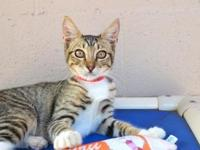 Java's story - Java is a resilient little lady that