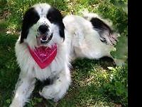 Terrific ** friendly ** Adores to please you. Finds out