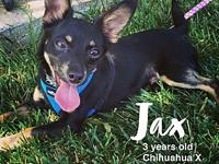 Jax's story Courtesy post: Jax is a 3/4 year old male