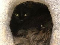 Jax's story Jax is a lovable female spayed cat,