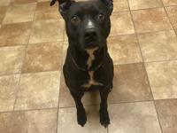 Terrier mix 2 years old Neutered Male Adoption fee:
