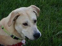 My story Jax is a 1-year-old neutered male yellow lab.