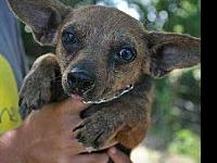 Jaxel's story Cute little guy but he was rescued from a
