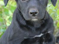 Jay is about 8-9 weeks old. He is a sweet, playful and
