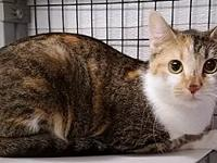 Jaycee's story Breed: Domestic Short Hair Age: 2 years