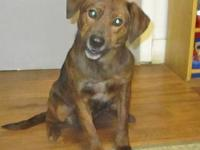 Jazz's story 19-D03-018 Jazz Breed: Mtn. Cur Mix Size:
