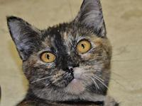 My story This is Jazz. I am one of 28 kitties rescued