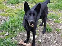 Jazz's story My name is Jazz and I am 2 years old. My