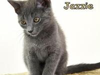 Jazzie's story Jazzie and her siblings have been in
