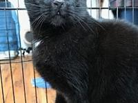 Jazzy's story Jazzy Age: 5 years old DSH/Neutered Male