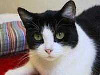 JAZZY's story Jazzy is a perfect tuxedo kitty who's got