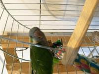 Jazzy is an adult Quaker parrot who is hand tame but a