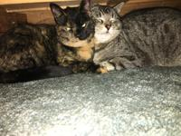 Jazzy (torti-female) and Gabey (tabby-male) are 3 years