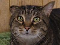 JD's story JD is a Domestic Short Hair (DSH), male, 2.5