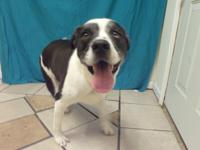Jed is a Border Collie mix that is about six years old.