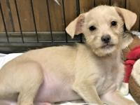 Jeffy is a 9 to 10 week old puppy who was surrendered