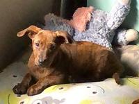 Jelly's story Jelly is an adorable Doxie/Whippet mix