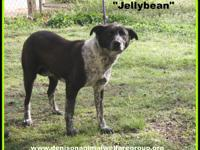 STRAY HOLD IN THE CITY POUND; 1803070 - Jellybean -