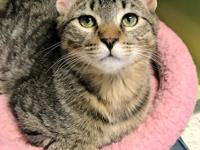 Jem is a darling striped tabby that was initially a
