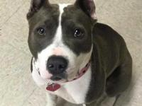Jena is an 12 month old American Bulldog Mix. Shes a