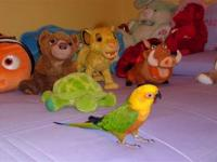 Kiwee is a beautiful Jenday conure, he'll be 5 yrs ole