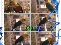 Guy Jenday Conure for Adoption. He is regarding 7 years