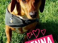 Welcome to the Wonderful World of Rescue Dachshunds.